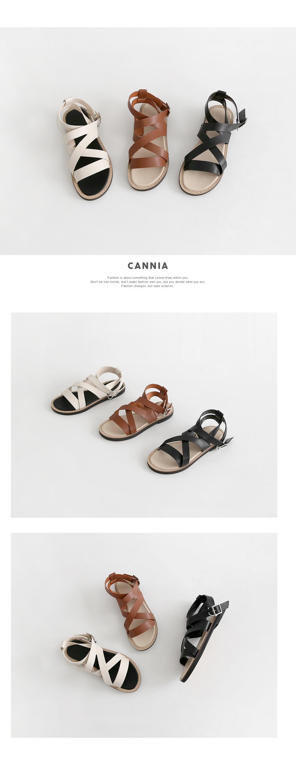 Cannia 1.5cm